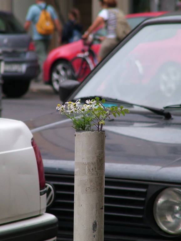 Photo: Flowers in the City