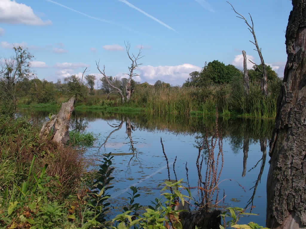 Photo: The Oder between Schwedt and Gartz