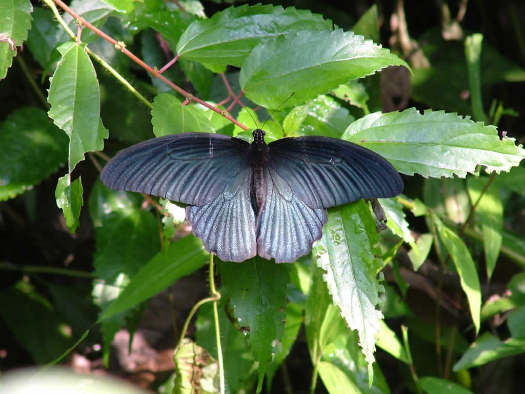 Photo: Cuc Phuong National Park, Butterfly