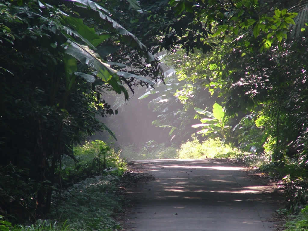 Photo: Road in Cuc Phuong National Park