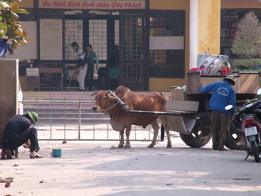 Photo: Ox and Cart
